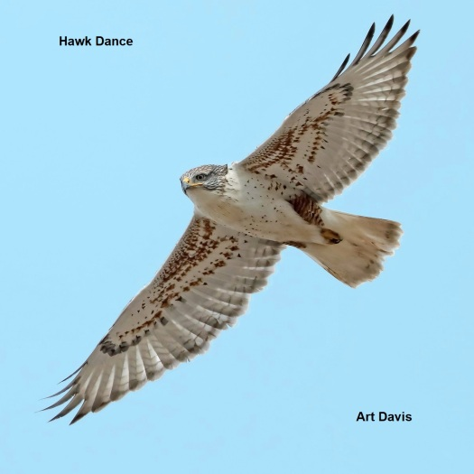 Hawk Dance Cover